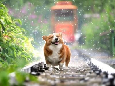 ¡Perros con sobrepeso! Opta por comida para perros light