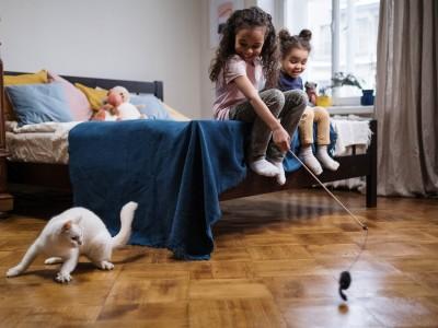 Alimentación saludable para gatos activos