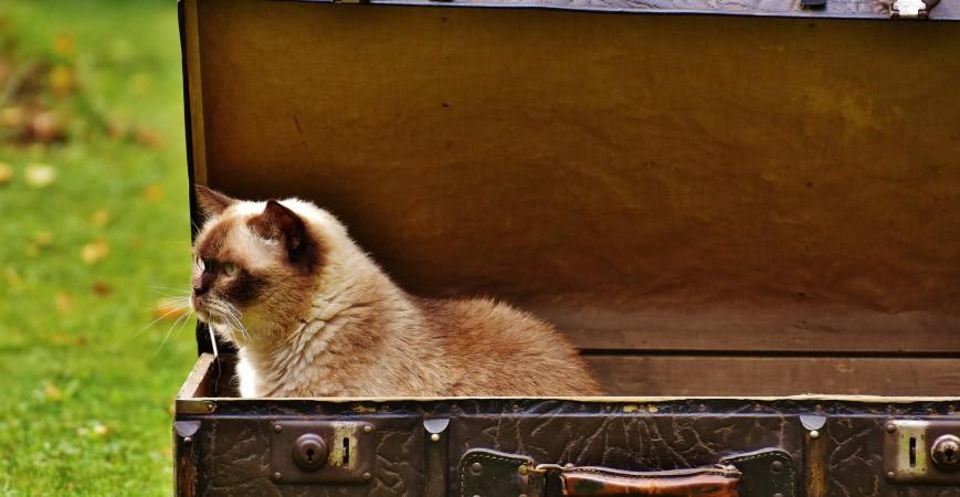 Recomendaciones para viajar con tu gato en coche