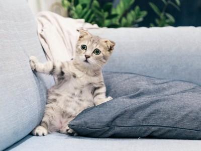 Descubre cómo bañar a tu gato