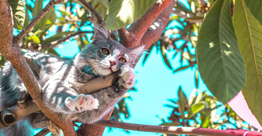 Cuidado que necesitan los gatos en verano