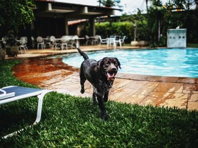 Cuidado que necesitan los perros en verano