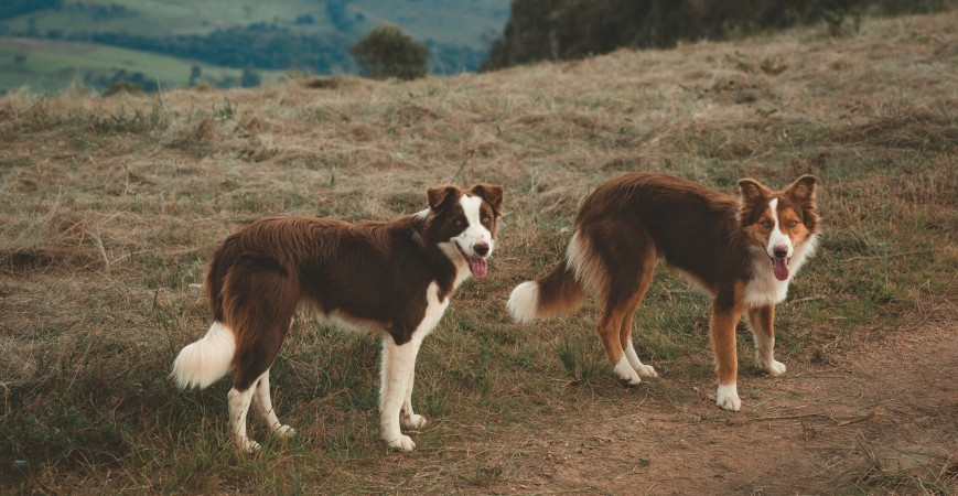 Piensos para perros alérgicos a los cereales