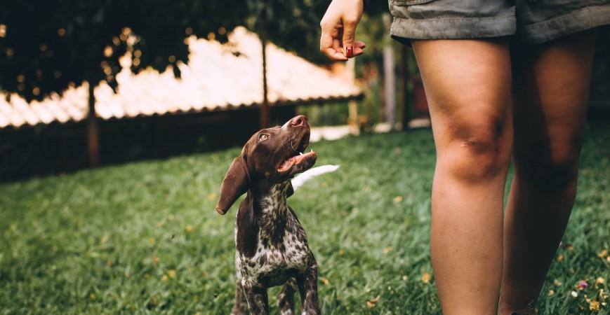 Piensos hipoalergénicos de alta calidad para perros