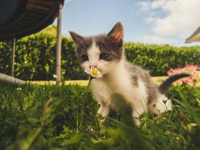 Guía de alimentación para gatitos