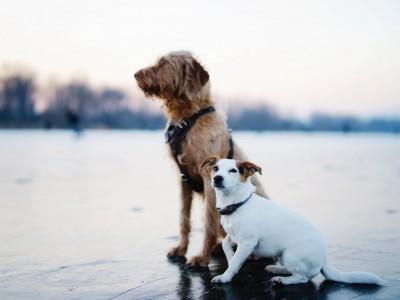 El cambio de cachorro a perro adulto